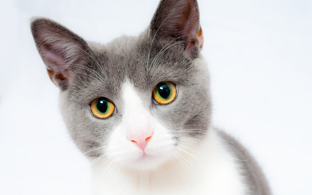 5 quick tips for handling a cat phobia.